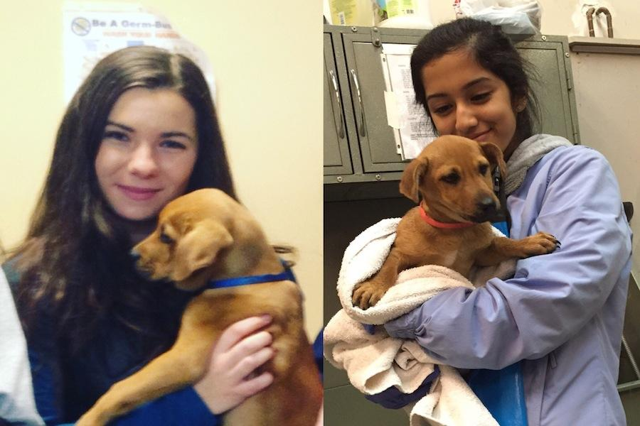 Juniors Alli Dipietro (left) and Ashya Singh (right) volunteering at Great Dog Rescue