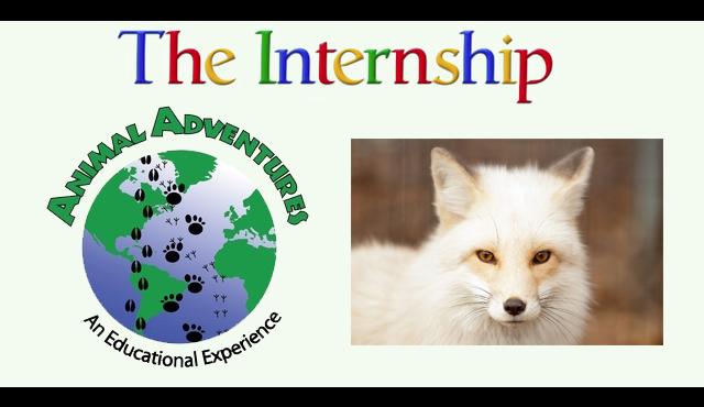 Video: An exotic internship
