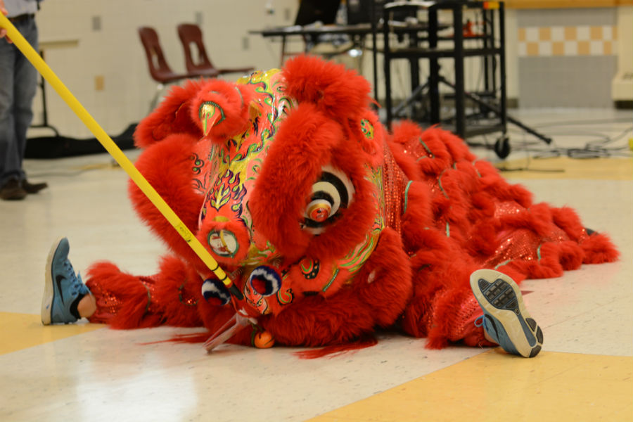 The lion stops to eat Antonelli's offering during the Lion Dance.