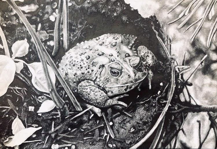 Drawing of a frog done by Mikayla Wagner.